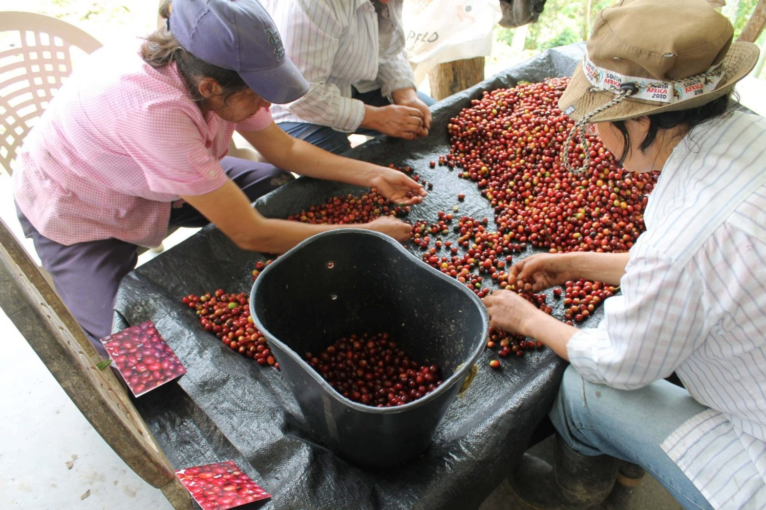 what is specialty coffee seed to cup