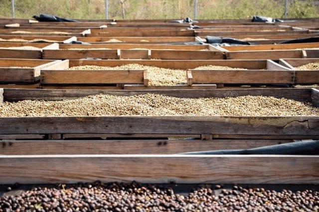 Camas elevadas con honeys y naturales