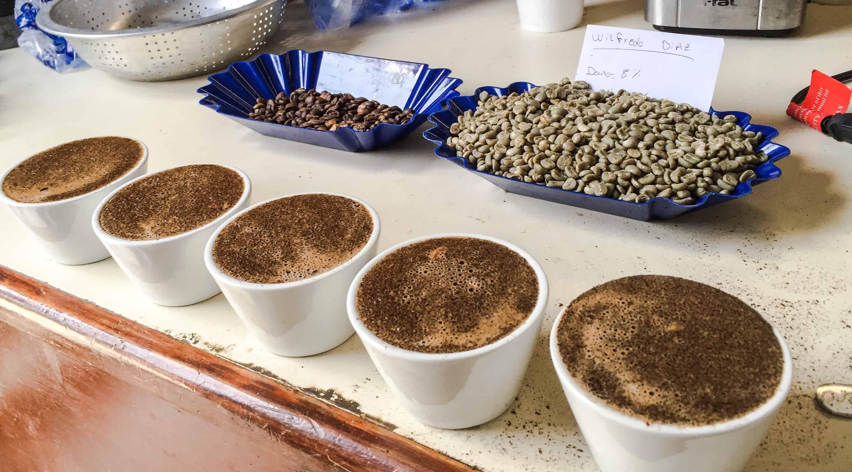 catacion de cafe