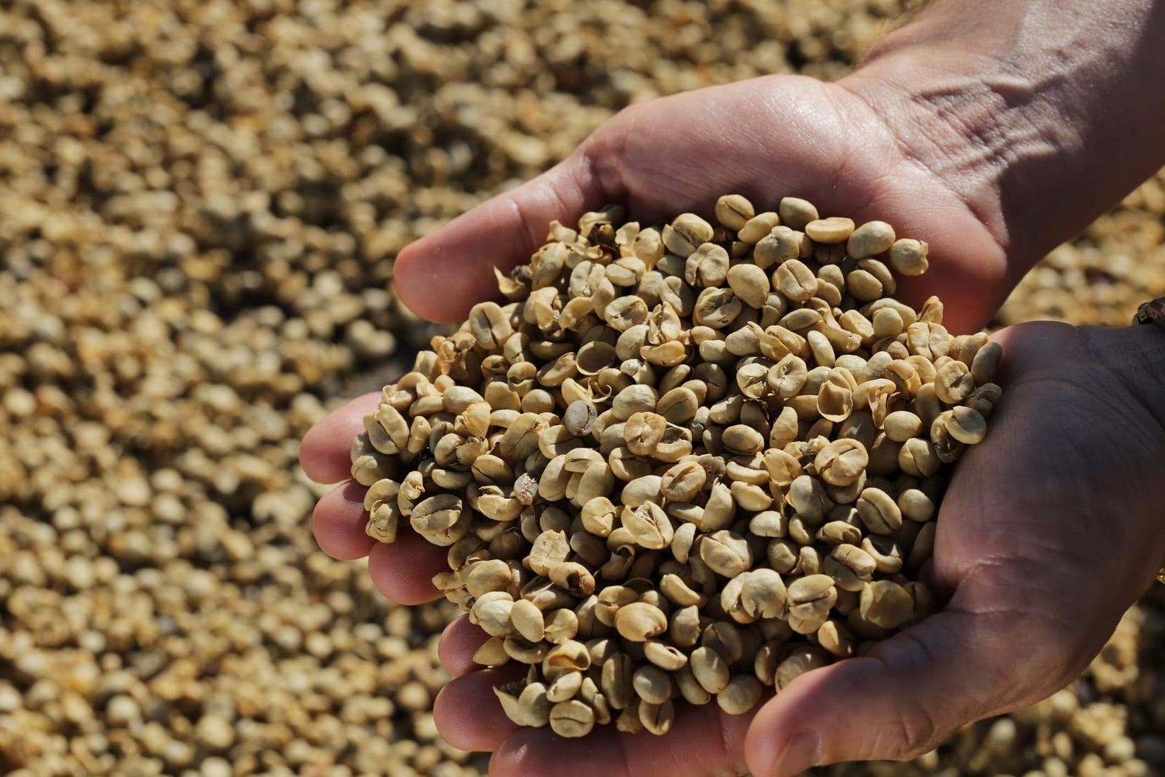 granos de cafe de sao luiz estate