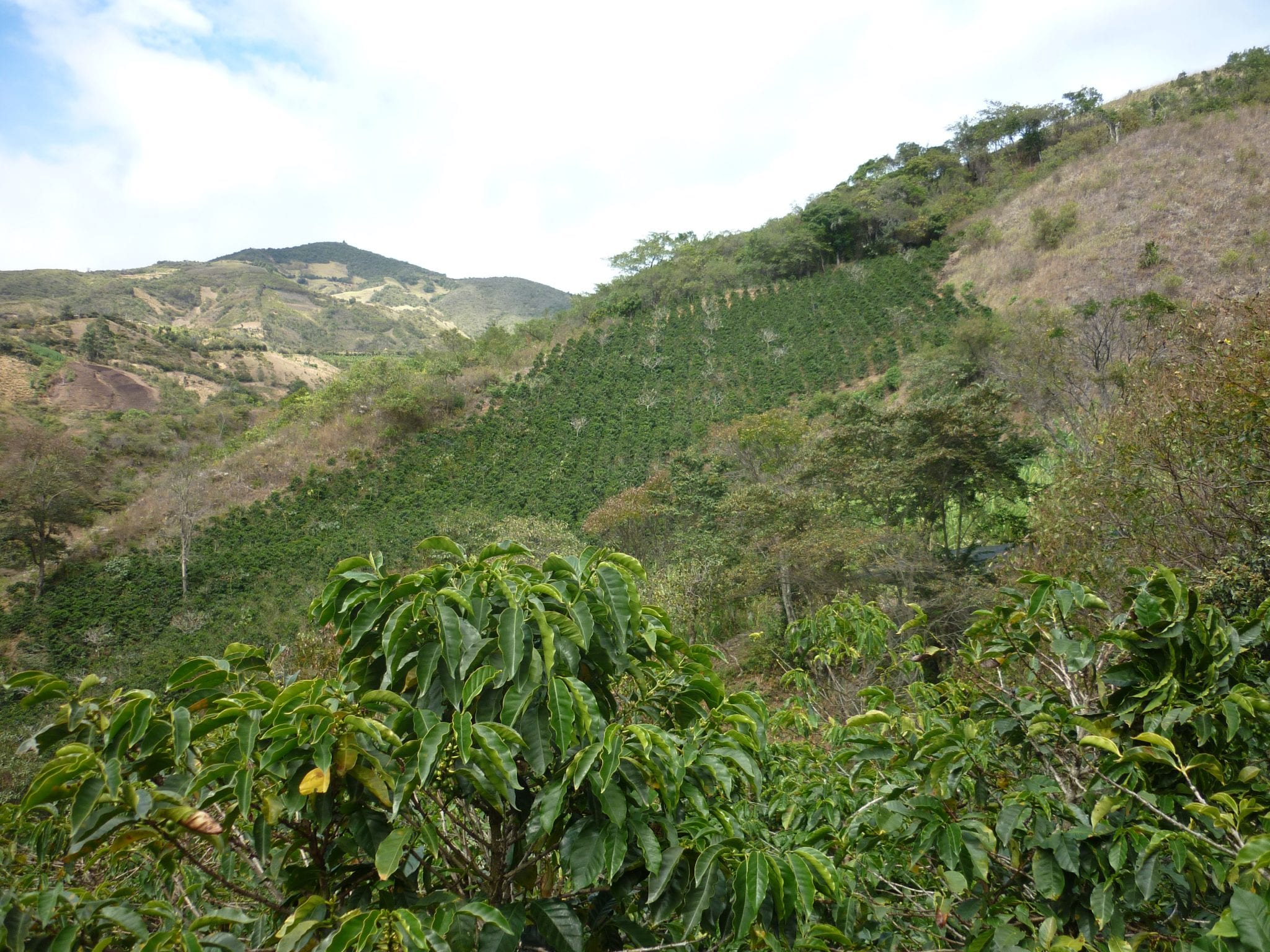 Viiew of coffee farms in Tolima