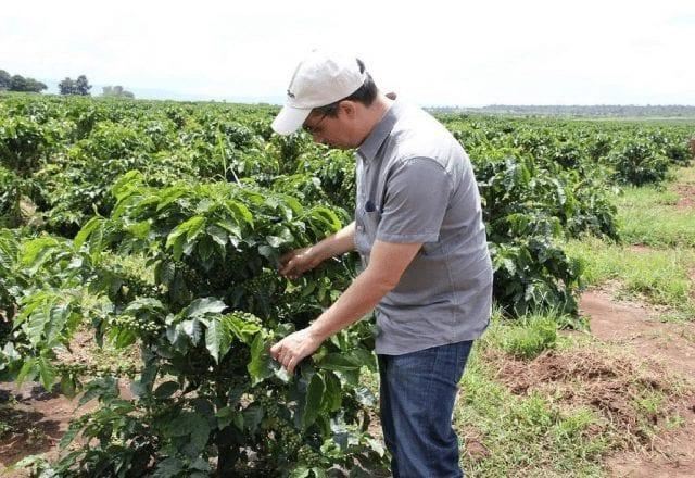 Productor en plantación de café