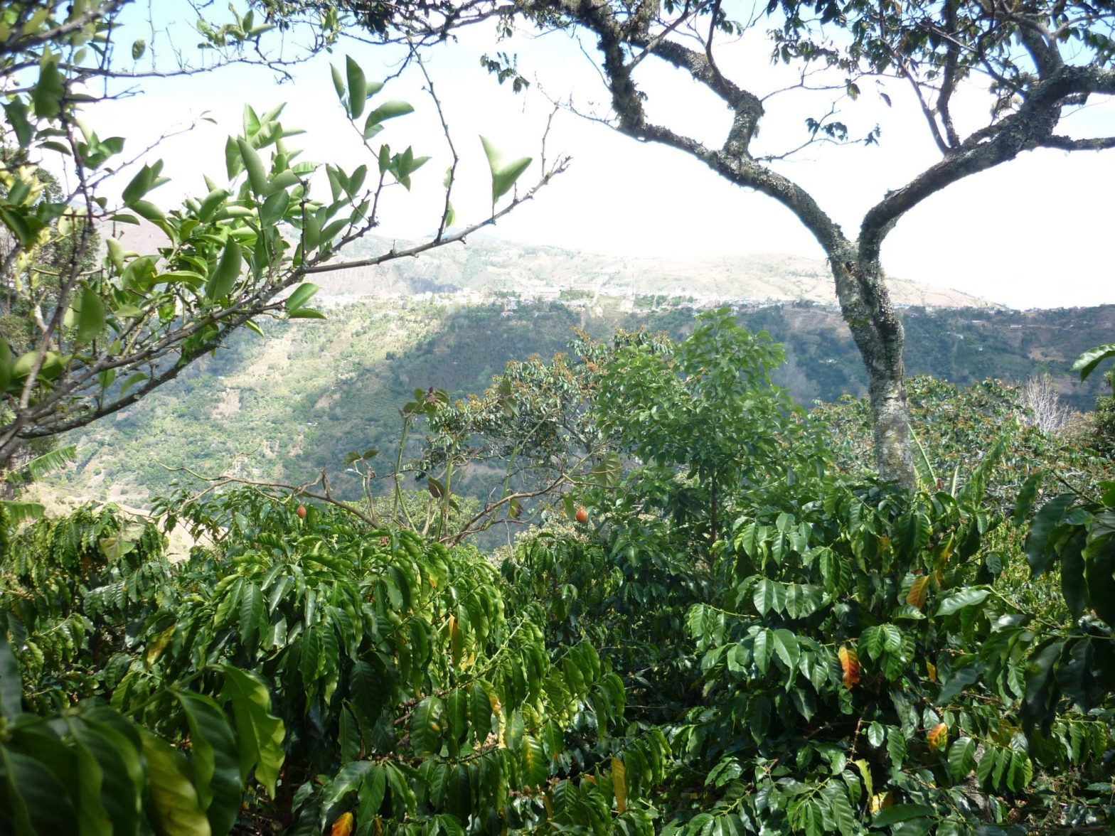 View from coffee farm in Tolima, Colombia