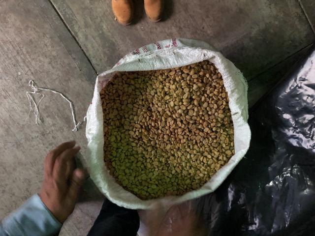 grãos de café recem colhidos