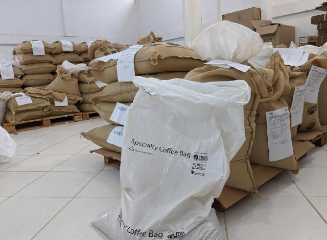 embalagem cafe verde