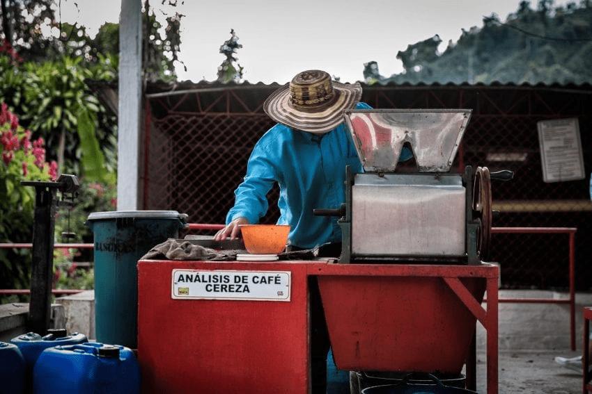 productor de cafe despulpando cafe en su finca