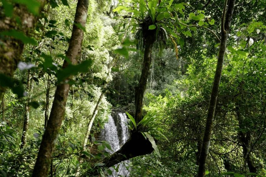 biodiversidad en africa