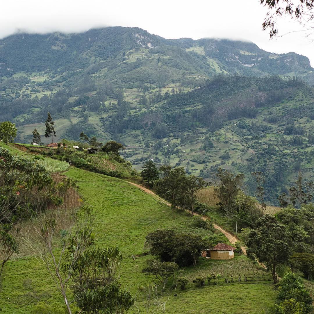 Colombian coffee farm