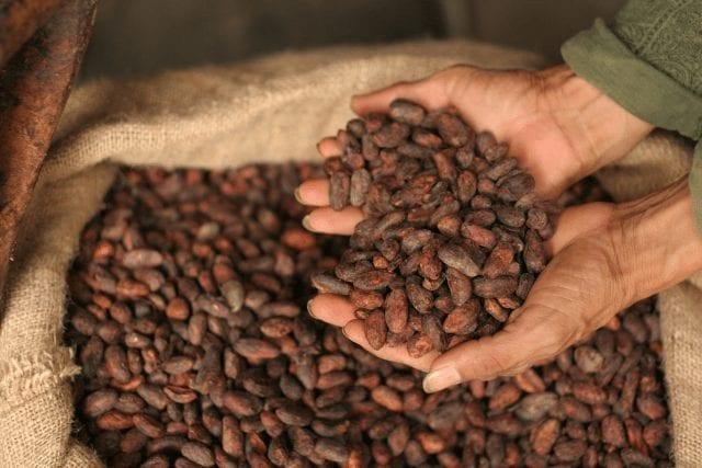 cacao para tueste