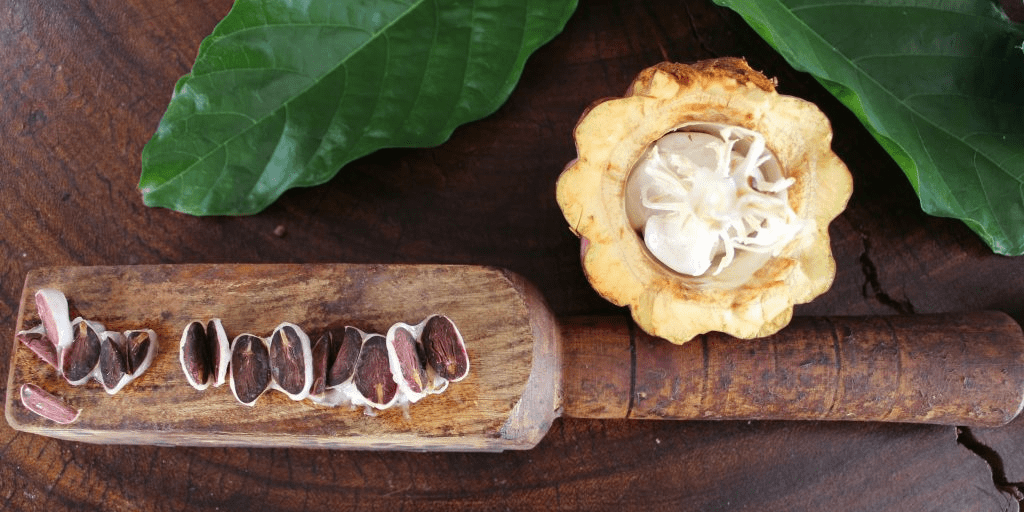 cacao y granos