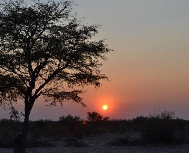 cafe en Botswana