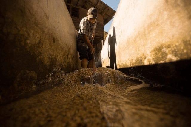 canales para el lavado de cafe