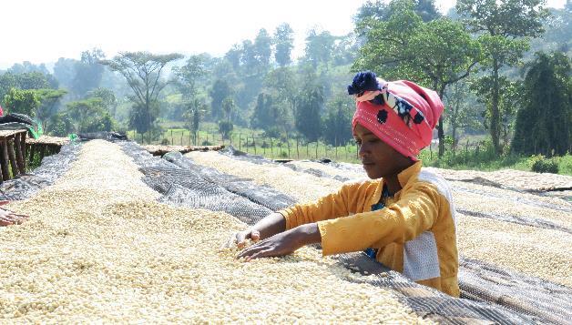 cafe en camas elevadas en indonesia