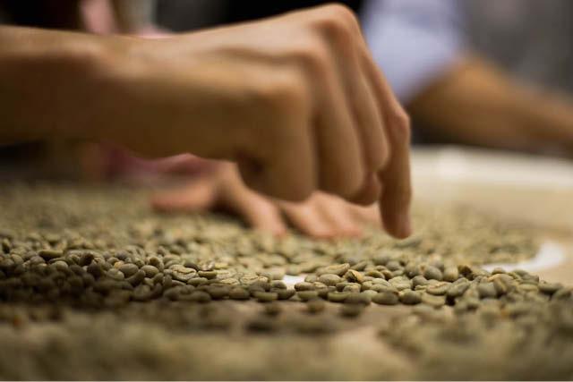 en control de calidad de cafe