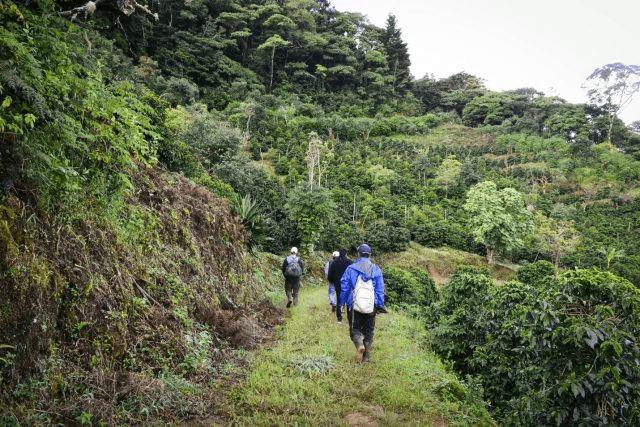 camino hacia una finca