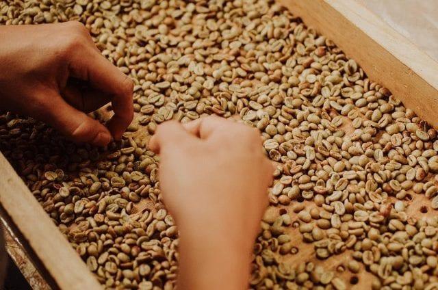 clasificacion de granos
