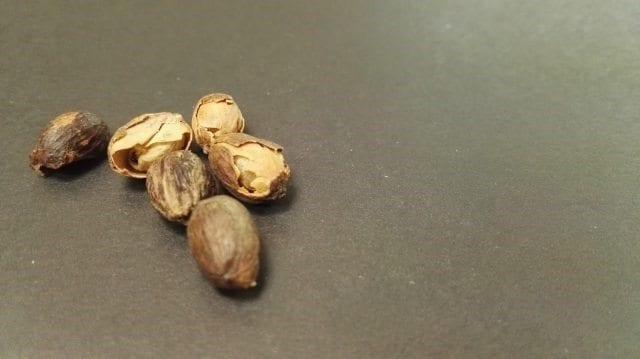 granos de cafe sin trillar