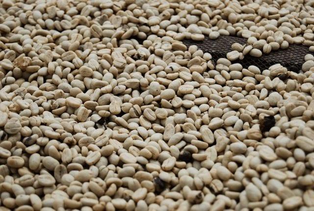 granos de cafe lavados