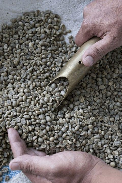 granos de cafe listos para tostar