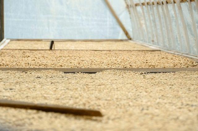 granos de cafe secandose en camas elevadas