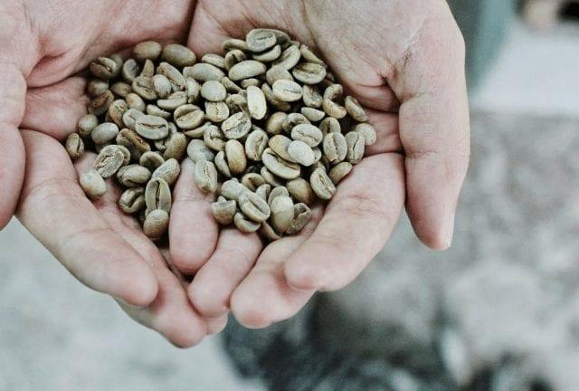 clasificacion de cafe verde por su productor