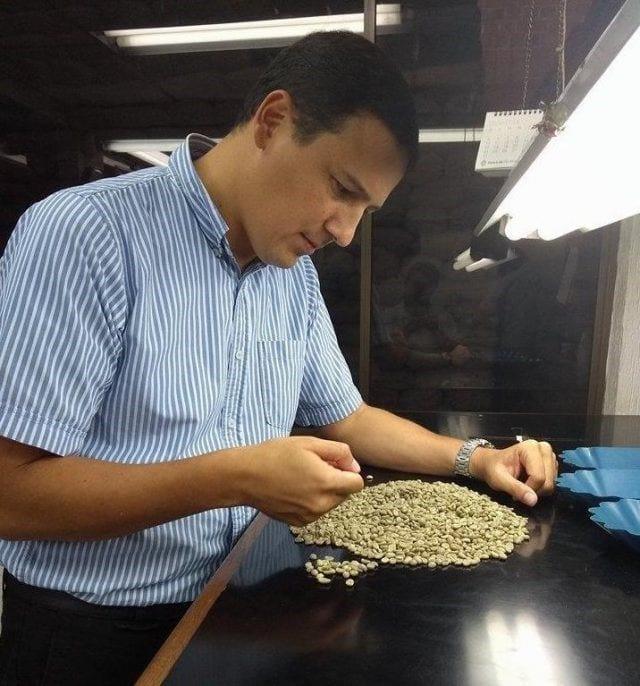 Productor inspecciona cafe verde