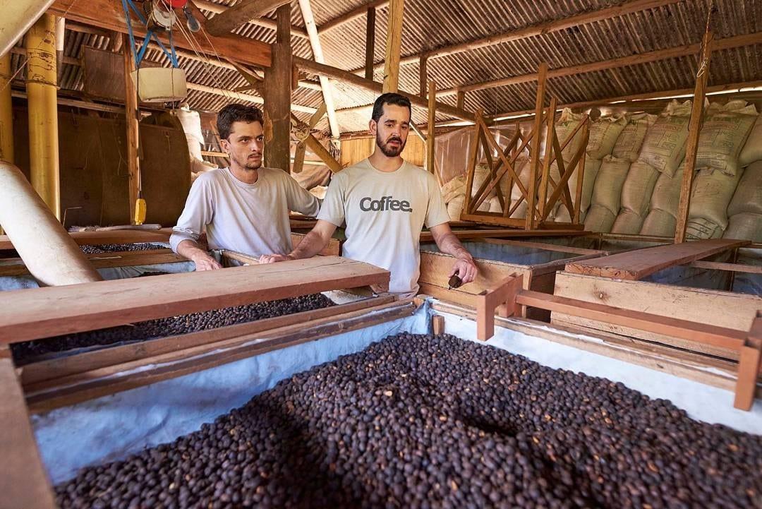 productora de cafe en una finca cafetera
