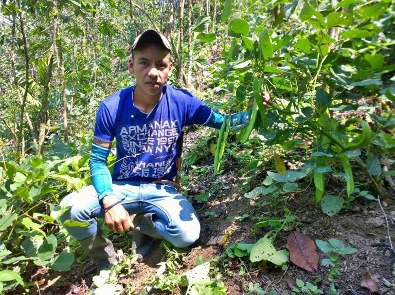 pruductor en region ixil