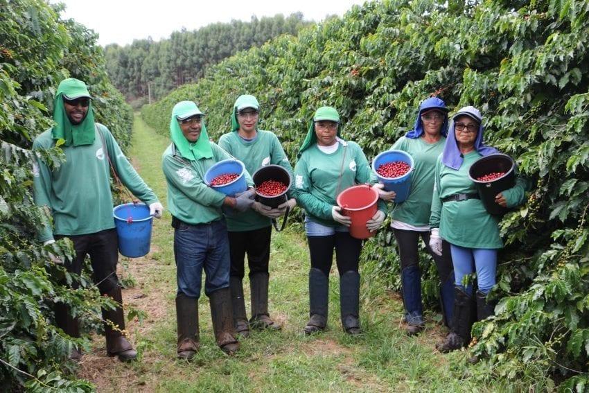 grupo de recolectores de cafe en Brasil