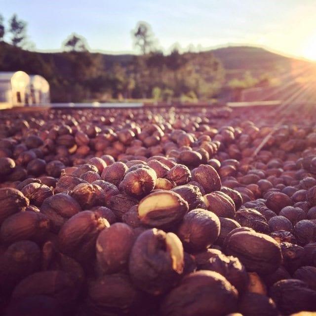 secado de cafes naturales