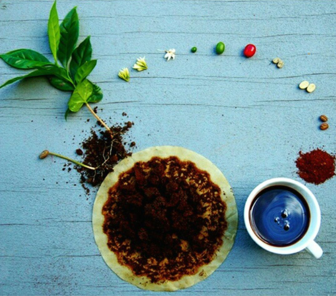 ciclo del cafe