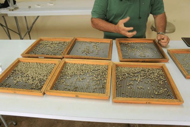 seleccion de granos