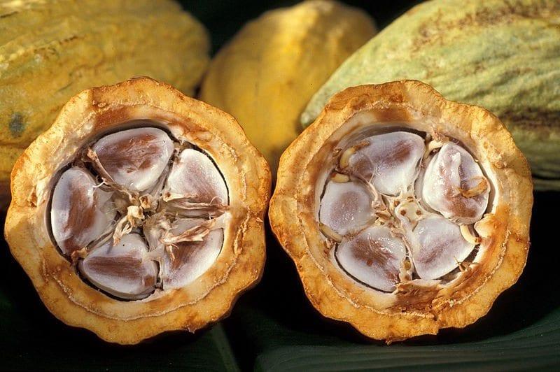 vaina de cacao cortada por la mitad