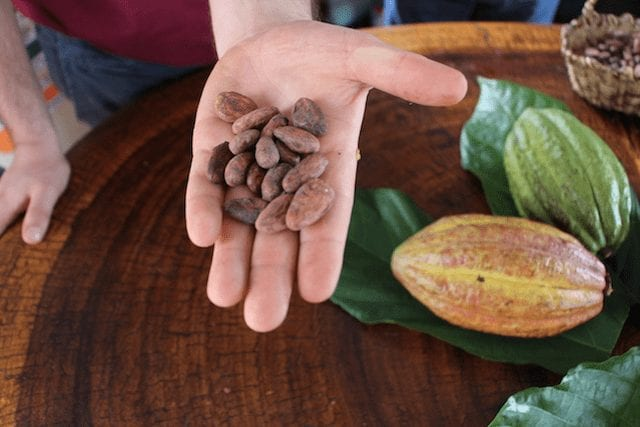 varios granos de cacao y una vaina de cacao