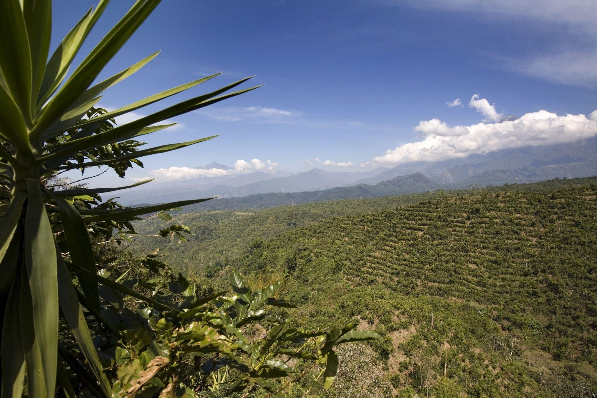 vista desde una finca cafetera en Guatemala