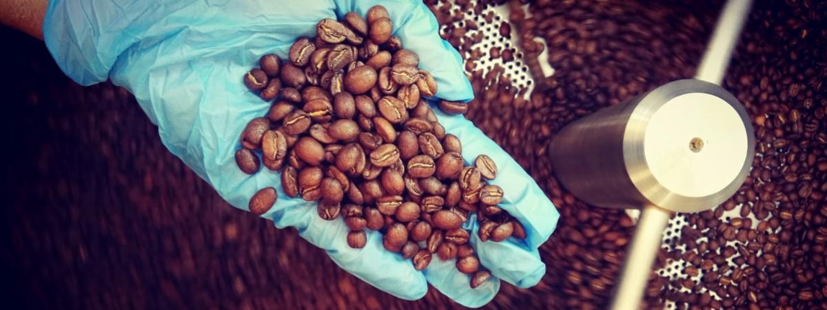 Mano con un guante azul y granos de café recien tostado