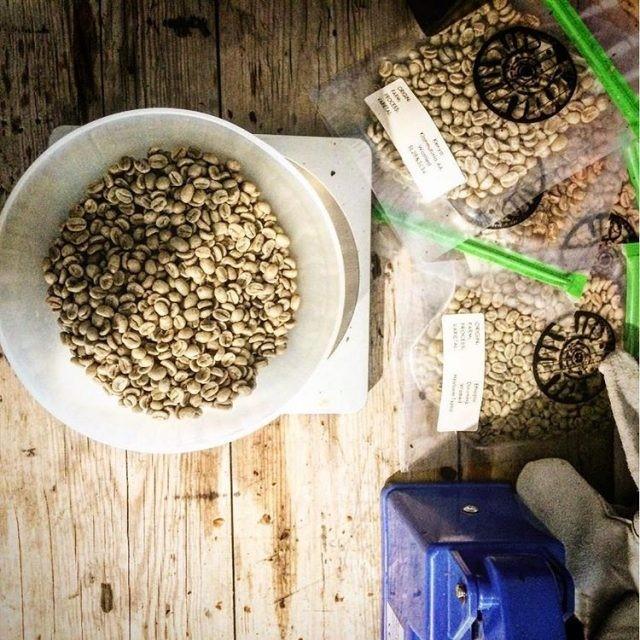 amostras de café