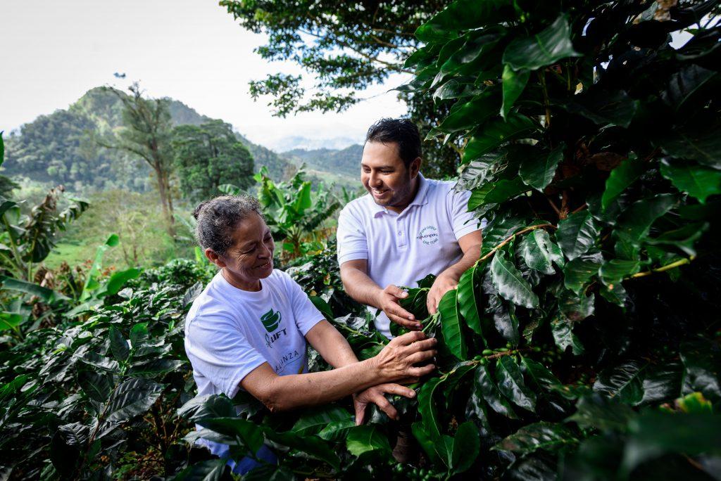 cafés sustentáveis