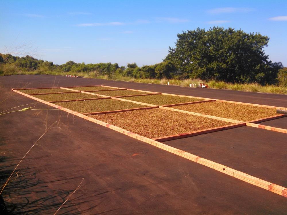 fermentação de café especial fazenda