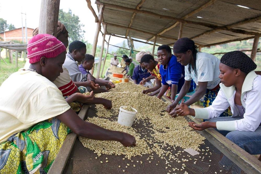mulheres de Ruanda origens de café