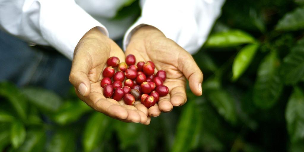 premiunização do café