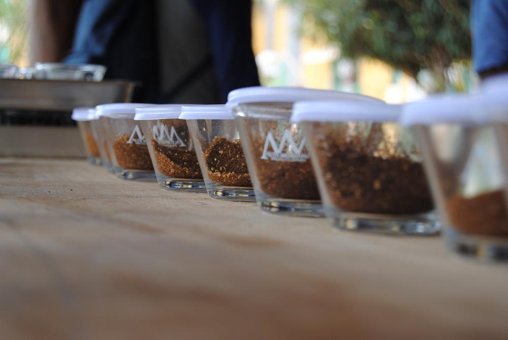 café cupping mogiana brasil