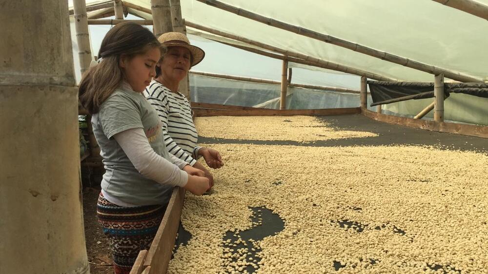 produtora de café