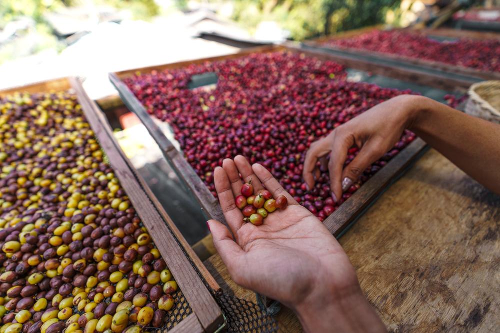 tamanho do café nutrientes