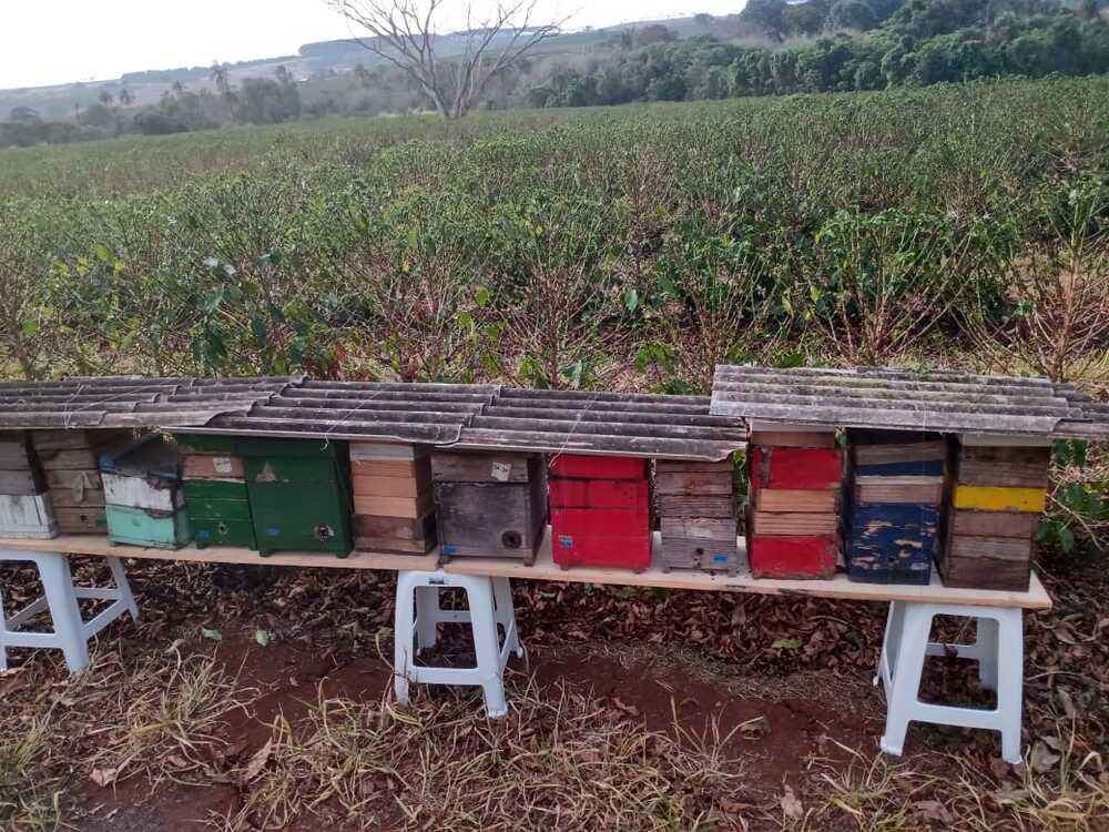 caixas de abelhas nativas no cafezal