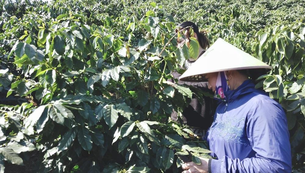 café vietnã