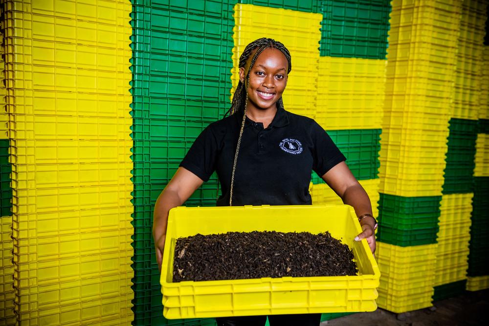 compostagem e carbono no café