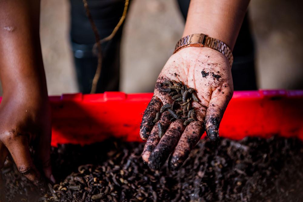 carbono neutro na produção do café