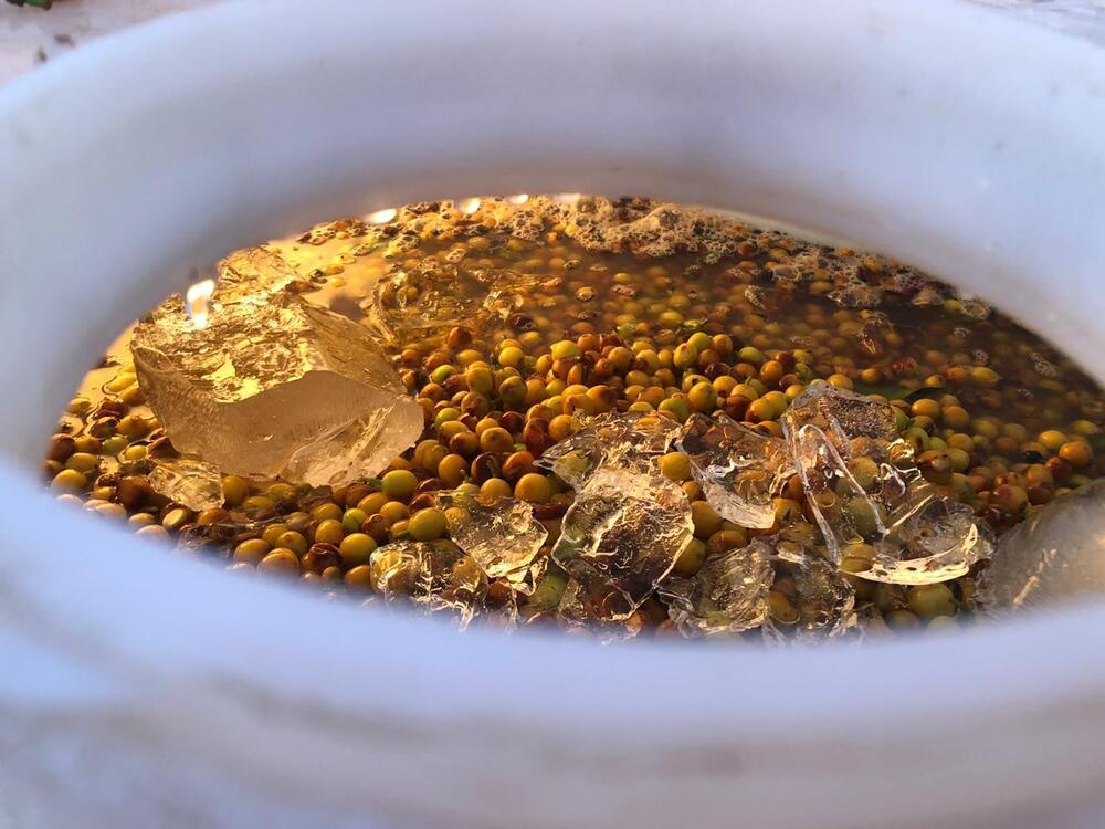 fermentação de café