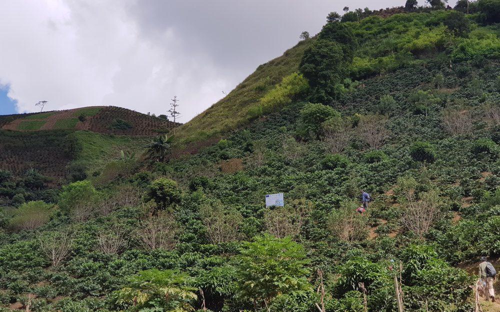 produção de café Vietnã